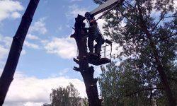 Спил деревьев на территории центрального государственного архива Санкт-Петербурга