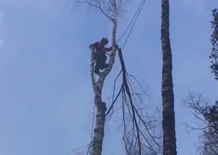 Спил дерева по частям с завешиванием