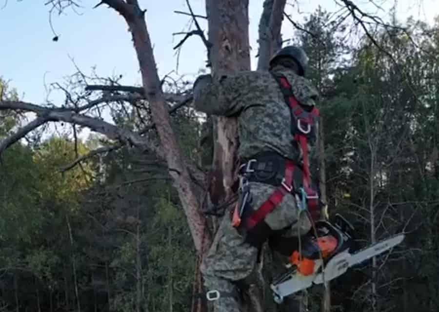 Cпил дерева по частям