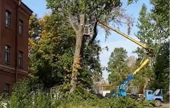 Cпил дерева с автовышки