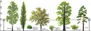 Высота деревьев